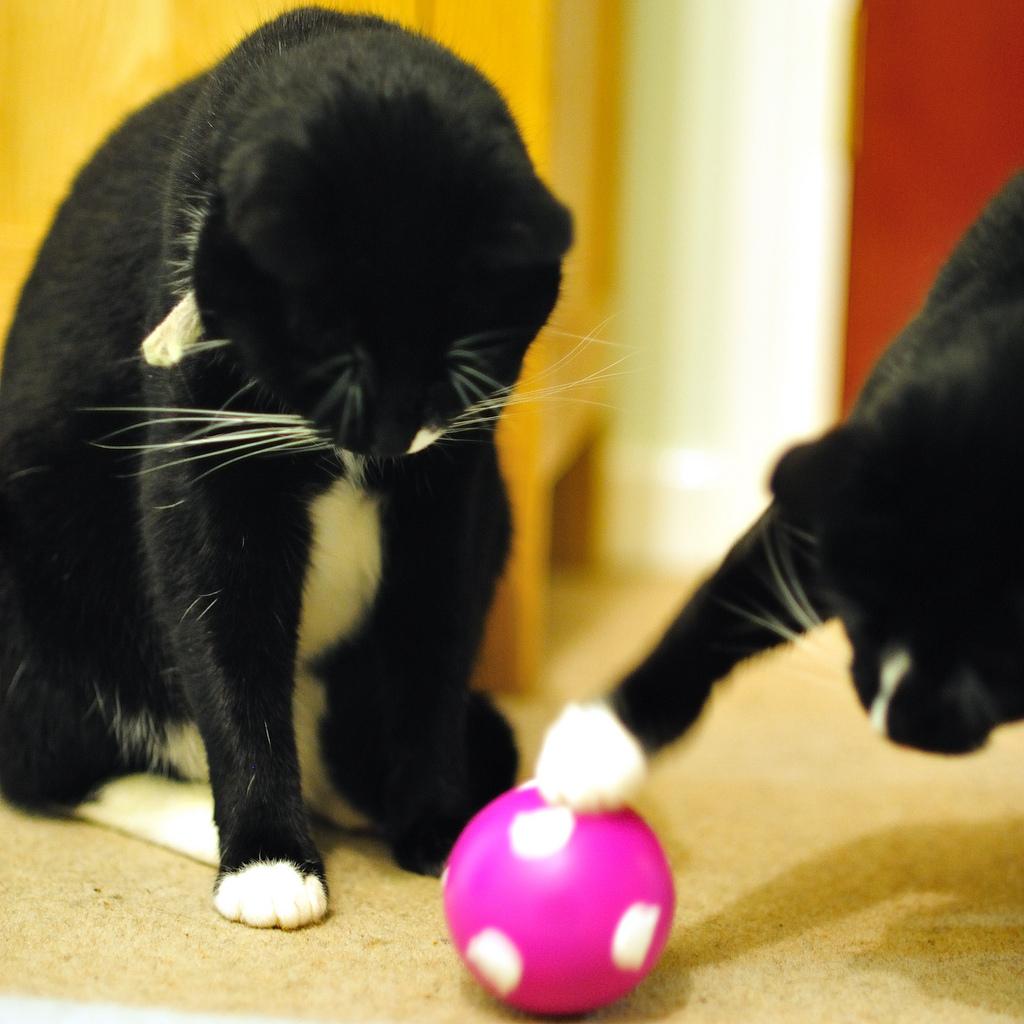 Leukste speeltjes voor de katten