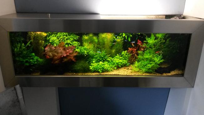 Verwonderlijk Met de juiste technieken een goedkope aquarium - D.B. Eindhoven BV-44