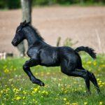Het beste voor jouw paard